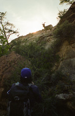 Zion National Park (somer_) Tags: zionnationalpark nationalpark outdoors adventure utah film 35mm kodak kodakektar100 southwest zion bighornsheep wildlife