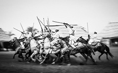 Fantazia Ryders (aminefassi) Tags: travel portrait people blackandwhite bw copyright horse sport cheval noiretblanc action culture ef50mmf14 morocco maroc tradition ryder panning rider cavallo rabat  6d  fantazia baroud equestre skhirat aminefassi