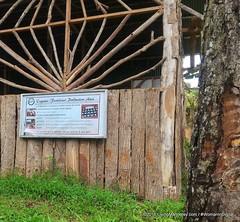 LivingMarjorney-Binahon-Agroforestry-Farm-Bukidnon (92) (livingMarjorney) Tags: forest travels farm tourist destination philippine bukidnon organicfarm organicagriculture binahonagroforestryfarm bukidnonphilippines agriculturaltraininginstitute