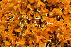 1510 India-1070008 (esther.park) Tags: centralmarket coubertmarket india pondicherry looseflowers petals