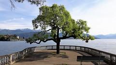 isole borromee (3) (giangian239) Tags: lago acqua blu giardino maggiore albero verde prato statua monumento isola isole borromee madre bella superiore panorama paesaggio lungolago