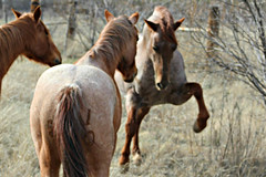 Do You Love Me.... (It Feels Like Rain) Tags: ranch horses horse texas westtexas equine ranching texasranches