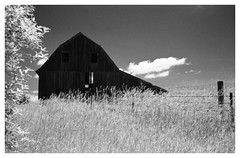 Dark Barn (Heinz9577961) Tags: blackandwhite bw frames border blackdiamond leicam2 infraredfilm selfdevelop summilux50mmf14le blackchromeedition rolleiinfred400 rodinal12520c730