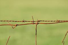 Prikkeldraad - Bob-wire - Explored (eric zijn fotoos) Tags: fence hek nikond90 sigma150500mmos