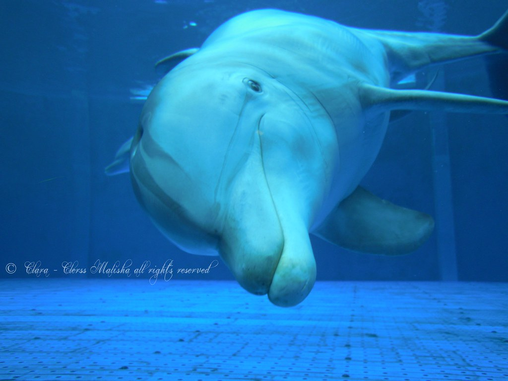 cetacea liguria - photo#38