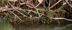 150502-IMG_0515 (matthiaskunz) Tags: bird birds spring ammer 2015 ammertal