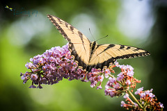 Flutterby - Greenwich Fine Art Photography (LookingUpPhotography) Tags: fineart greenwich fineartphotography karenkahn lookingupphotography greenwichphotographer lookingupphoto greenwichfineartphotographer greenwichfineartphotography greenwichphotography