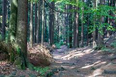 Elbsandsteingebirge near Dresden (achilles.l) Tags: nature germany landscape deutschland dresden forrest hiking landschaft elbsandsteingebirge