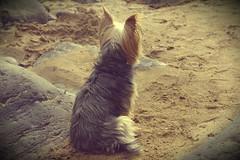 barney. (Katie-Anne Jones) Tags: camera dog beach photography jones photographer katie samsung location subject somewhere barney nx5