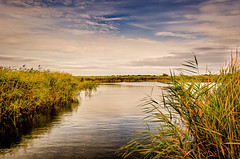 Norfolk Marshland (C.G.Photos) Tags: norfolk broads holidays potterheigham norfolkbroads marshes travel england