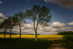 Trees (Jarek Jahl) Tags: trees sky sunlight nature clouds landscape shadows poland lowersilesia nikond7200 sigma1835mmf18dchsmart