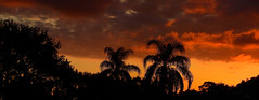 Monday morning Sky (Jim Mullhaupt) Tags: pictures camera morning pink blue red wallpaper sky panorama orange sun color tree weather silhouette yellow clouds sunrise landscape photography dawn photo nikon flickr florida pano snapshot picture palm exotic p900 tropical coolpix bradenton geographic sunup nikoncoolpixp900 coolpixp900 nikonp900 jimmullhaupt