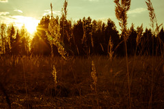 / During sunset (alexander_teodorovich) Tags: nature spring village pentax k5    fa31mmf18limited