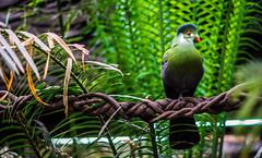 Color verde / Green color (carlosestebangaldamesespinoza) Tags: chile santiago verde green bird sony ave alpha slta58 alpha58