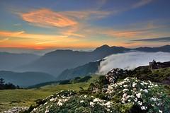 合歡山東峰~玉山杜鵑雲瀑晨彩~   Taiwan Alpine Rhododendron Sunrise,clouds waterfall (Shang-fu Dai) Tags: sunrise landscape nikon taiwan formosa 台灣 雲 合歡山 杜鵑 仁愛 雲海 hehuan 南投縣 日出 杜鵑花 3421m 合歡東峰 雲瀑 玉山杜鵑 東峰 高山杜鵑 taiwanalpinerhododendron afs1635mmf4 d800e
