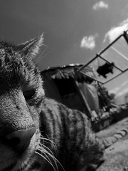 Cookie (chicitoloco) Tags: cat gato kater