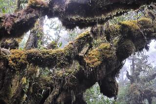 cameron highlands- malaisie 20