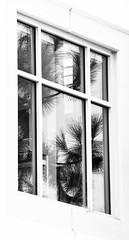San Diego reflection (Noel Leone--my reality in and out of focus) Tags: bw reflection window palms mono sandiego libertystation hww happywindowwednesday