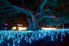 Vivid 16, @ Botanical Garden, will-o-wisps (IAGD+P) Tags: nightphotography light colour tree sydney entertainment animation botanicalgarden festivaloflights artworks vivid2016
