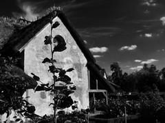 Gardener's house (Nicolas -) Tags: versailles france muse museum tourism tourisme visit visite house maison gardener jardinier branch branche cloud nuage sky ciel dark sombre nicolasthomas yvelines noir contrast contraste mur wall