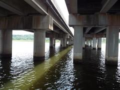 5 River Delta Alabama (64) (Stonehenge 68) Tags: 5riversdelta mobile delta wildlife alligator duck pelican water waterhyacinth hemlock snowyegret alabama