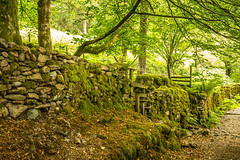 Mossy Stonework (ian.emerson36) Tags: trees tree wall woodland moss path cumbria stile drystone