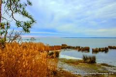 Golden Sea Oats (T i s d a l e) Tags: summer september seaoats easternnc tisdale curritucksound 2013 goldenseaoats