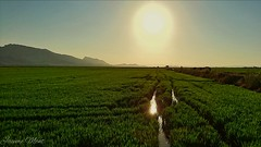 The sun falls on the rice fields. (PhotoMont) Tags: fvac ngc colourartaward pointofwiew apersonalwiewpoint elmanicomio elmundopormontera eltrendelosrinconesdeespaa flickrnature flickrenespaol flickr grangrupodeflickr flickrcentral spain espaaenfotos espaa