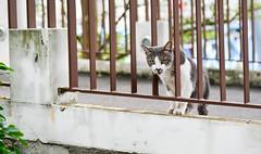Wait up... (BHiveAsia) Tags: cat cats feline felines animal animals kitten kitty wild wildlife life nature portrait pet pets cute neko