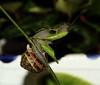 El banquete está servido (Txaro Franco) Tags: caracol comiendo jaten barraskiloa