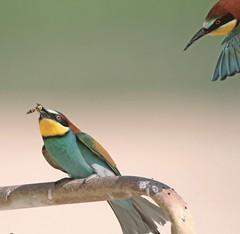 (mohd alsulaiti) Tags: hot bird birds canon google hard arabic arab natgeo 2015             7dcanon