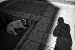 Santiago de Chile (Alejandro Bonilla) Tags: chile street city santiago urban blackandwhite bw blancoynegro monocromo calle sam sony streetphotography ciudad bn urbana urbano santiagodechile curacavi santiagochile monocromatico reginmetropolitana santiaguinos sonya290