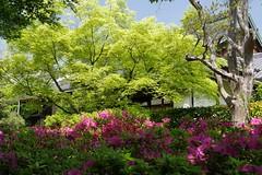 (nobuflickr) Tags: nature japan kyoto   freshgreen    entokuintemple 20160426p1050984