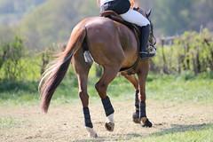 IMG_0128 (dreiwn) Tags: horse horseshow equestrian horseback reiten horseriding showjumping gelnde eventing marbach reitturnier vielseitigkeit reitsport pferdekopf pferdesport springreiten gelndestrecke eventingmarbach