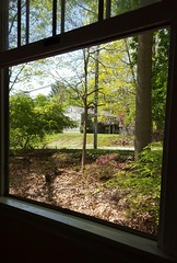 My Favorite Window (SurFeRGiRL30) Tags: flowers trees light greenleaves sun sunlight house green window nature beautiful sunshine yard newjersey spring rocks sitting azaleas nj peaceful screen neighborhood rebirth neighbor bushes windowsill woodchips windowpanes