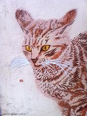 IMG_4820web (Alvaro Barata) Tags: streetart cat stencil estencil