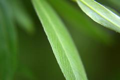 DSC_0045.NEF (tibal26) Tags: flower closeup natural x10