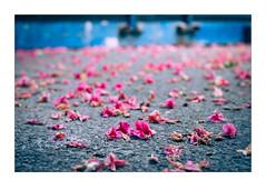 Chestnut Flowers (Oieblikke) Tags: pink flowers blue chestnut below
