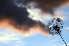 Fumogeno (stefyBuff) Tags: sky smoke fumo