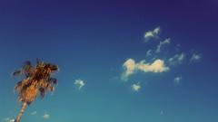 306/365 On the beach (darioseventy) Tags: blue summer sky clouds nuvole estate blu bluesky minimal palmtree summertime minimalism minimalismo palma