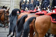 GARDE REPUBLICAINE DEFILE 14 JUILLET 2016 (Reportages, voyages et rencontres.) Tags: defile14juillet2016 garderepublicaine gendarmerie armeefrancaise