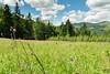 DSC_2464 (czargor) Tags: mountains landscape hill mountainside beskidy inthemountain dogtrekking beskidzywiecki