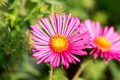 DSC01038.jpg (chagendo) Tags: pflanze makro makrofotografie sonyalpha7ii 90m28g outdoor