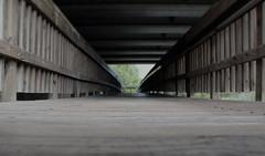 Walkway (kyle.moeglin) Tags: depth field canon rebel t6 dark grey walk way bridge path nature wood