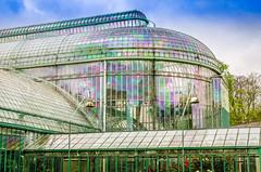 Royal Greenhouses in Laeken (andrewhardyphotos) Tags: flowers brussels architecture garden belgium belgique bruxelles greenhouse cherryblossoms japanesetower leopoldii royalgardens royalgreenhouse sigma1750mmf28exdcoshsm royalpalaceinlaeken
