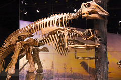 Prosaurolophus with tree (juan_guthrie) Tags: drumheller alberta royaltyrrellmuseum dynosaur