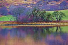 Tree Island. (artanglerPD) Tags: tree water reflections island calm loch etive