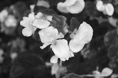 Flora 5 (wyn97) Tags: california new york pink flowers blue school sunset sun white black flower love college nature sunshine yard sunrise garden happy utah backyard nikon colorado day peace purple florida alabama happiness sunflower montgomery d3100
