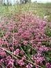 Divčibare 082 (jecadim) Tags: flowers wild mountain trekking spring hiking meadow divčibare