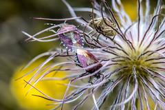 Käfer